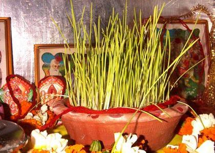 Sowing of Barley - Chaitra Navratri